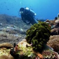 Drift Diving Di Nusa Penida - Bali