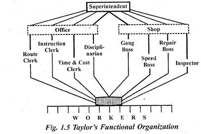 What do you understand by functional organization ? Write