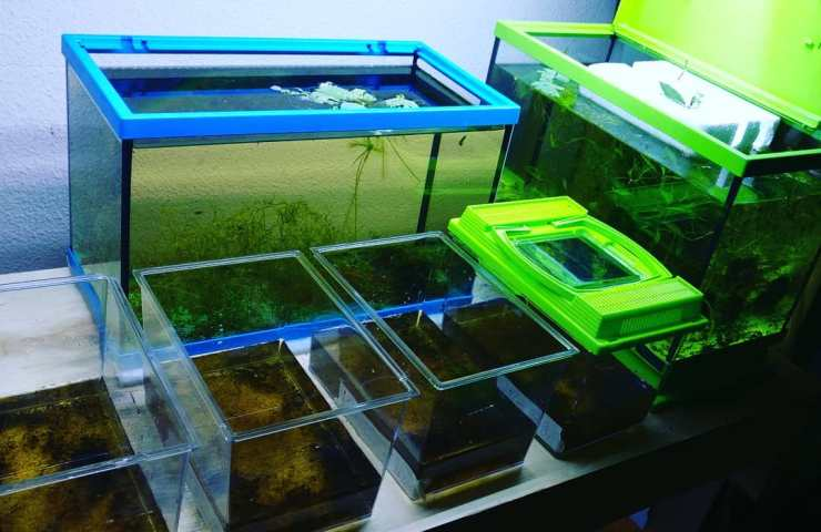 killifishroom - killi fishroom