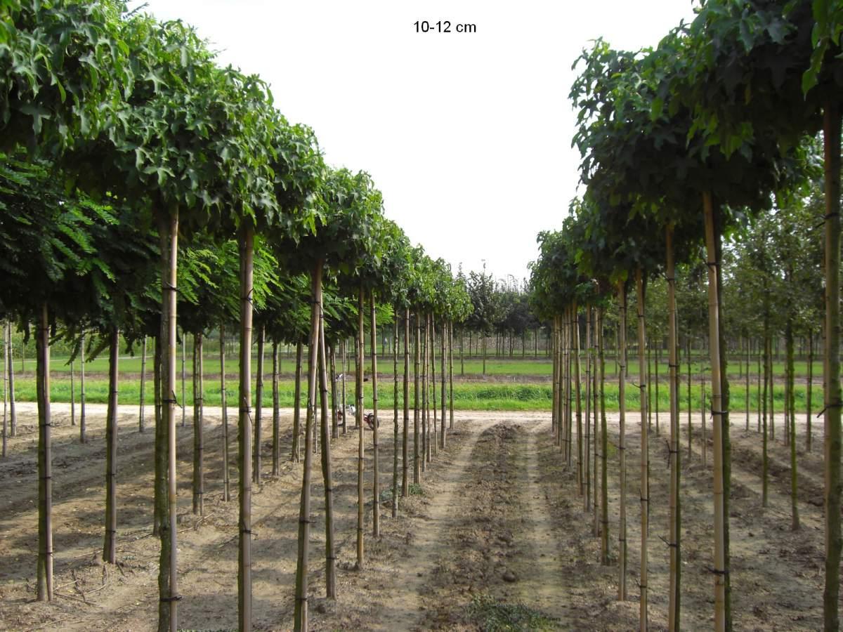 Zierbäume Garten Outdoor Bonsai Bereichert Jede Gartenanlage
