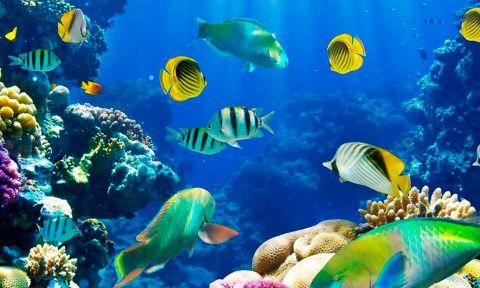 Cancún en lo profundo