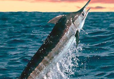 Pesca deportiva en Los Cabos, Baja California Sur
