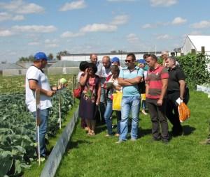 Аграрии района обсудили урожайность капусты