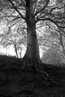 Judy woods black and white 8