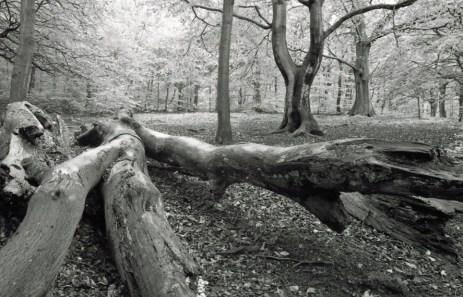 Judy woods 21