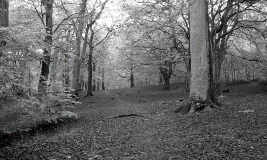 Judy woods 3