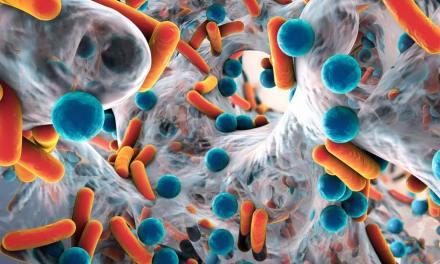Différence entre probiotique et prébiotique ?