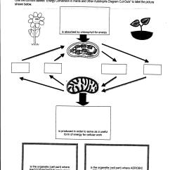 Photosynthesis And Cellular Respiration Diagram 2000 Chevy Impala Wiring Worksheet Comparing