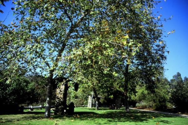 Temescal Grassy Area