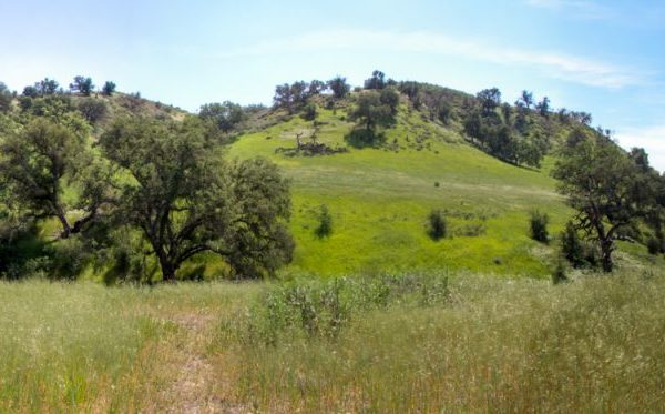 Upper Las Virgenes Open Space Preserve. Photo by Shawn Hinsey