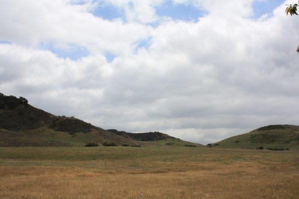 Fran Pavley Meadow