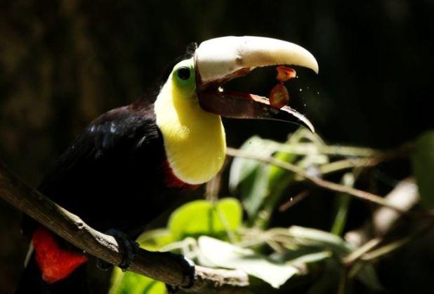 Image c8806cbac5801351aad64c65bf62a5aa in post Chú chim gãy mỏ được cứu sống nhờ công nghệ in 3D