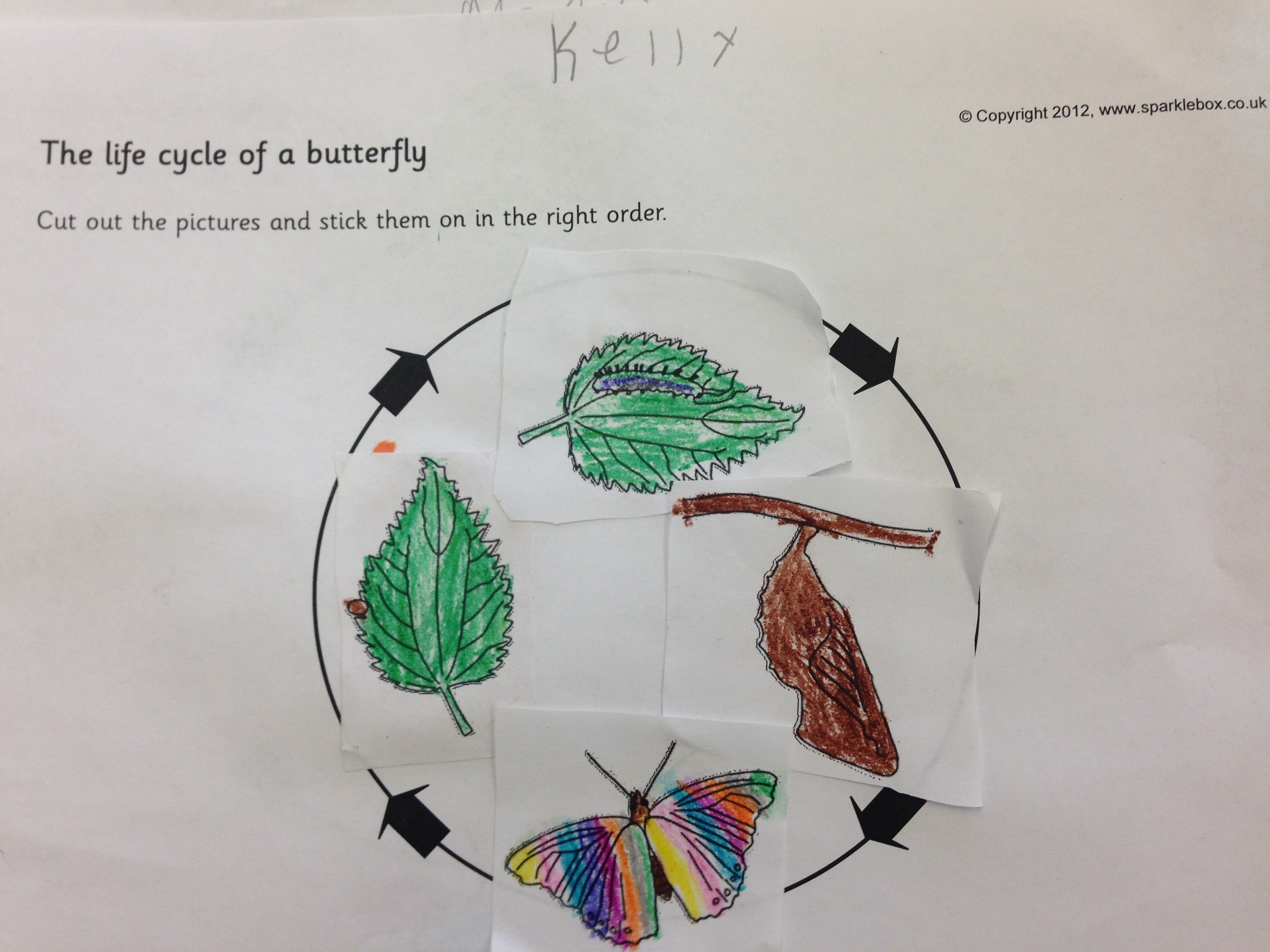 Life Cycle Of A Butterfly Classroom Display Photo Sparklebox
