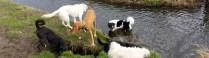 De donderdagmiddagploeg op de hondendijk