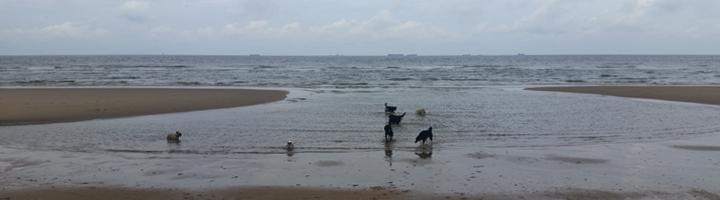 strandfeestje
