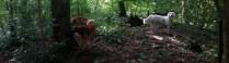 Gezellig dagje in de bosjes