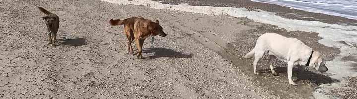 hondenuitlaatservice Scheveningen