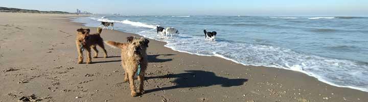 dog walker The Hague Scheveningen