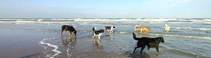 Hondenuitlaatservice Den Haag Scheveningen