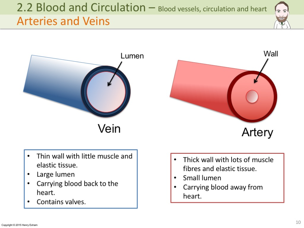 2 3 Blood And Circulation