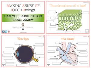 IGCSE Revision Diagrams | Mr Exham Making Sense of Biology
