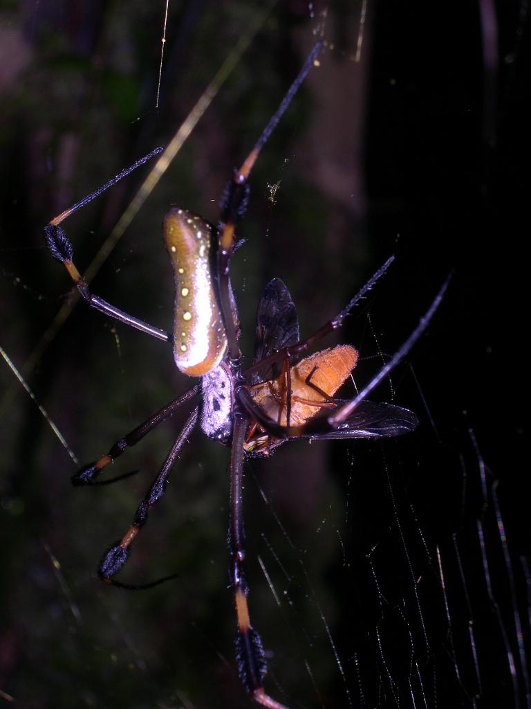 OTS La Selva Biological Station, Costa Rica