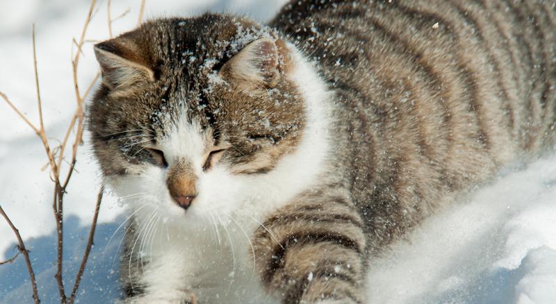 Home - MRFRS | The Merrimack River Feline Rescue Society
