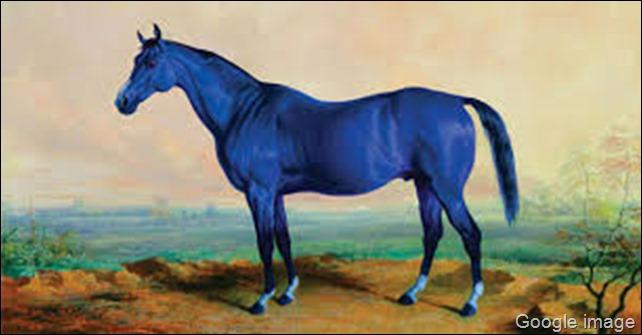 kuda biru terbaik