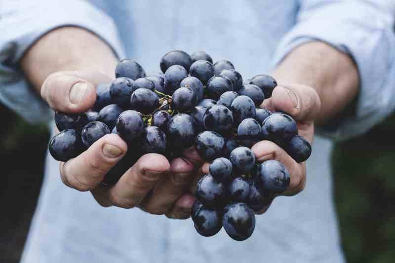 Organic Grapes Budgeting
