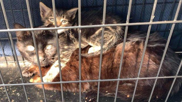 Cat Tricks Dog Into Cage