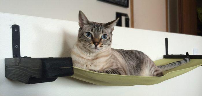 Hængekøje til Cat.