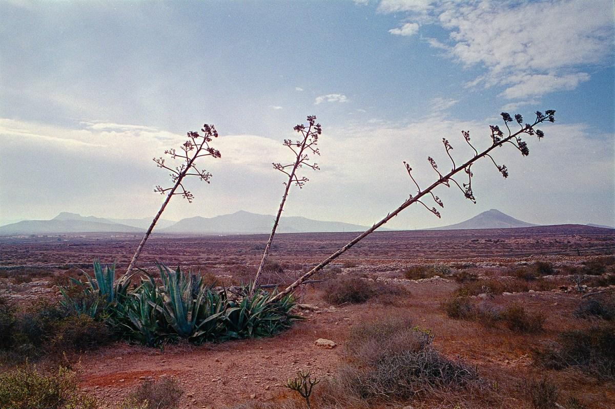 Film Landscape Photography