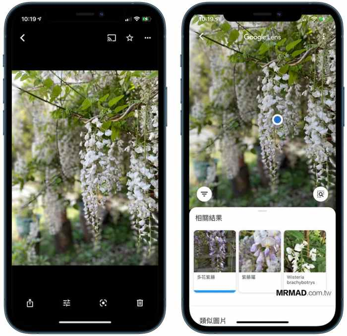 隐藏的Google相册技术可在一秒钟内识别花朵,植物,猫狗,风景和食物