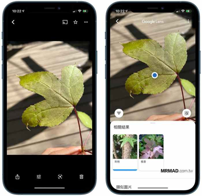隐藏的Google相册技术:在1秒钟内识别花朵,植物,猫狗,风景和食物