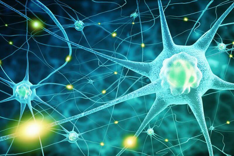 神經傳導物質連接