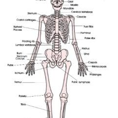 Skeleton Diagram For 4th Grade Elec Fan Wiring Mrmcivor