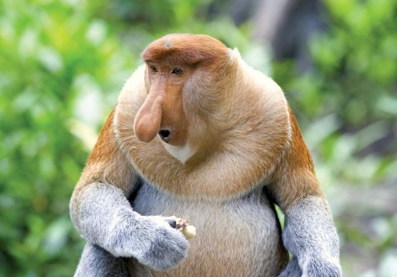 Assez Ces 22 espèces disparaîtront probablement au cours de cette génération SA46