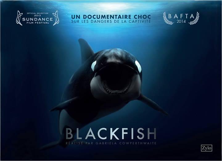 """Résultat de recherche d'images pour """"blackfish"""""""