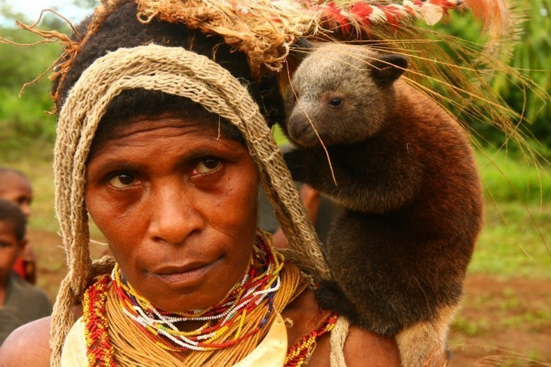 Baby_tree_kangaroo_on_the_chiefs_wifes_shoulder_-Papua_New_Guinea-17Oct2008