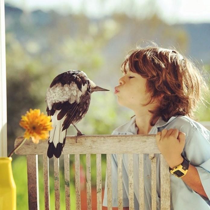 penguin-magpie-rescue-friendship-bloom-family-australia-21