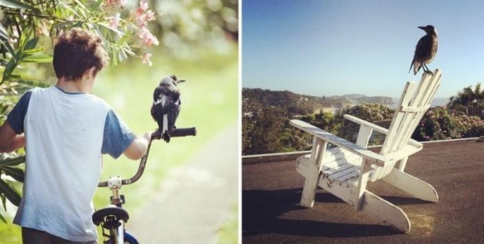 penguin-magpie-rescue-friendship-bloom-family-australia-24