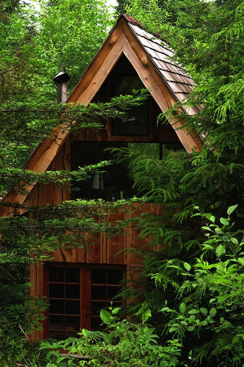 Cool-forest-house-clad-in-wood