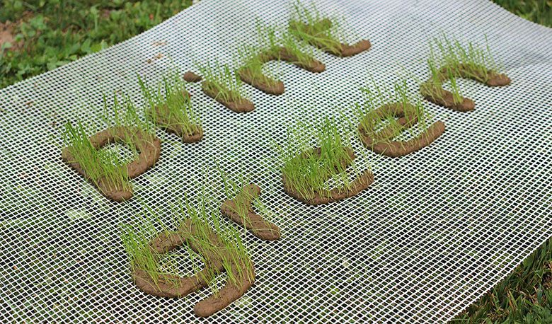 print-green-3d-printing-growing-grass-5