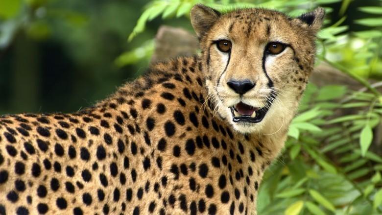 Relativ 10 espèces en danger qu'un touriste peut tuer contre de l'argent… EU22