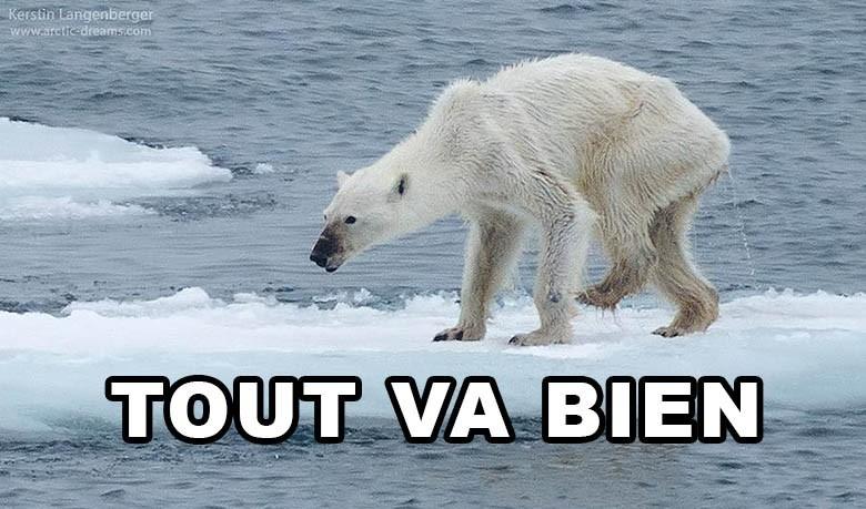 Extrêmement Une photo d'ours polaire affamé fait le tour du monde QJ83
