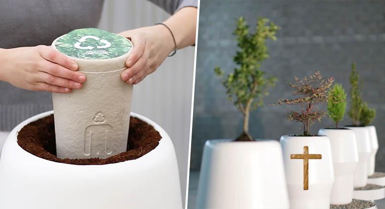 urne funeraire devenir un arbre