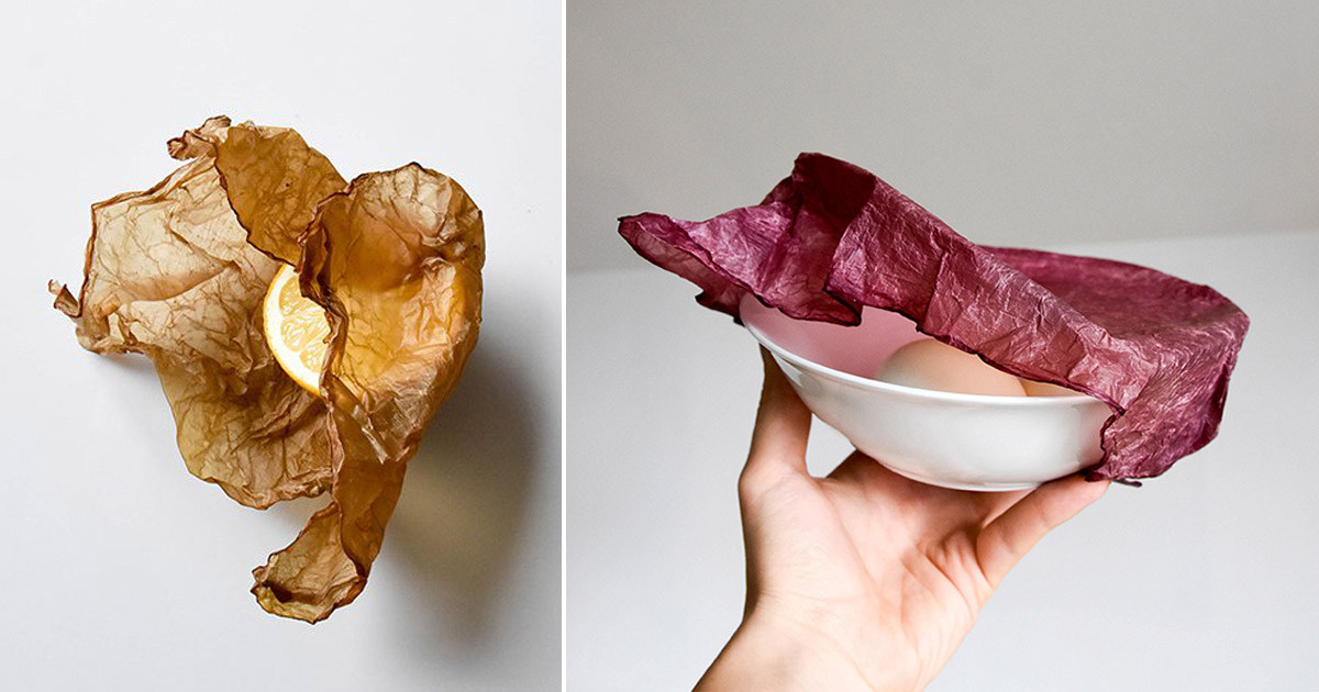 Envoyer un message privé Makegrowlab-scoby-packaging-grow-and-compost-like-vegetables-designboom-1200