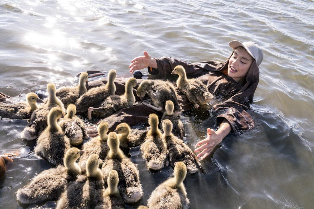 Donne-moi des ailes : un voyage extraordinaire pour sauver des oies sauvages ! By MrMondialisation Pp20180614dma_1273-1024x683