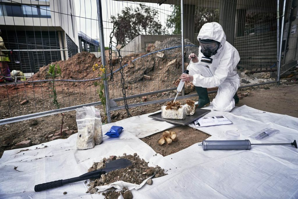 PuriFungi:un cendrier vivant dépolluant à l'assaut des mégots