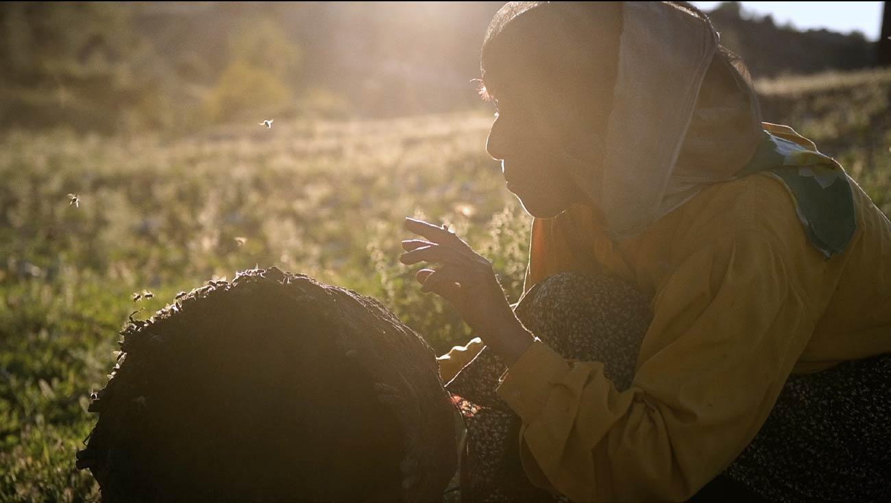 Honeyland : récit de l'incroyable Femme aux Abeilles ! (vidéo sur Bidfoly.com) By MrMondialisation Honeyland2